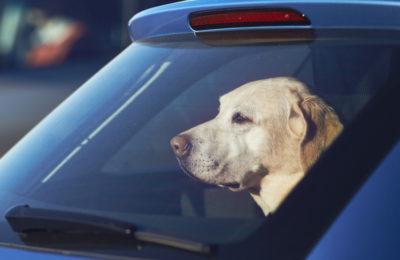 California Divorce Pet Custody | California Law 2274